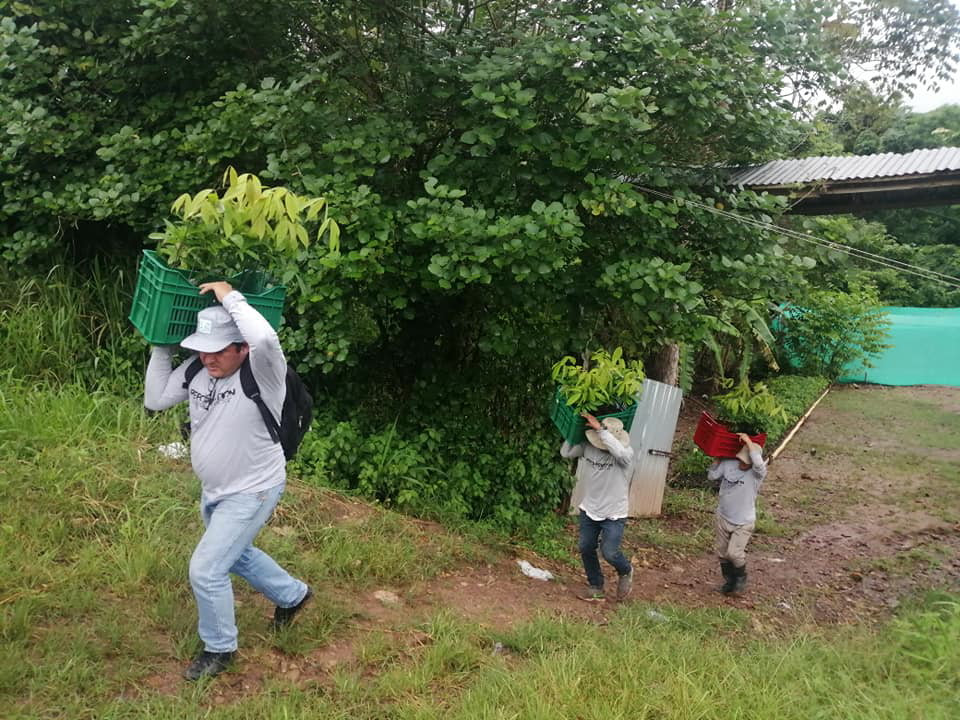 One Tree Planted initiative closing 3