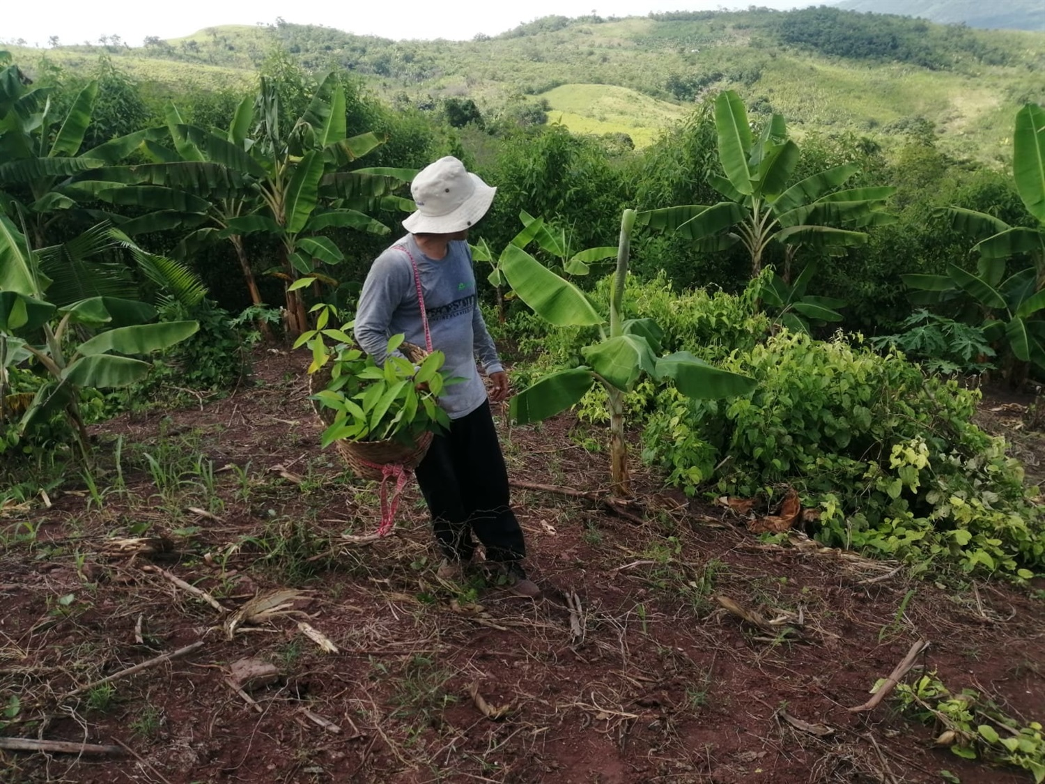 One Tree Planted initiative closing 4