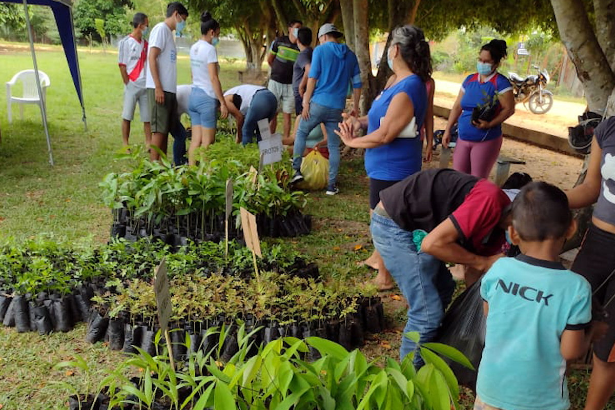 One Tree Planted initiative closing 6